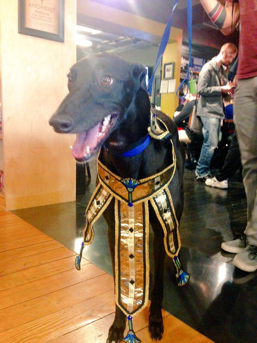 Meet Goblin, our very own Dog-Pharaoh. #MTGAKH #MTG https://t.co/4JqIpXxljA