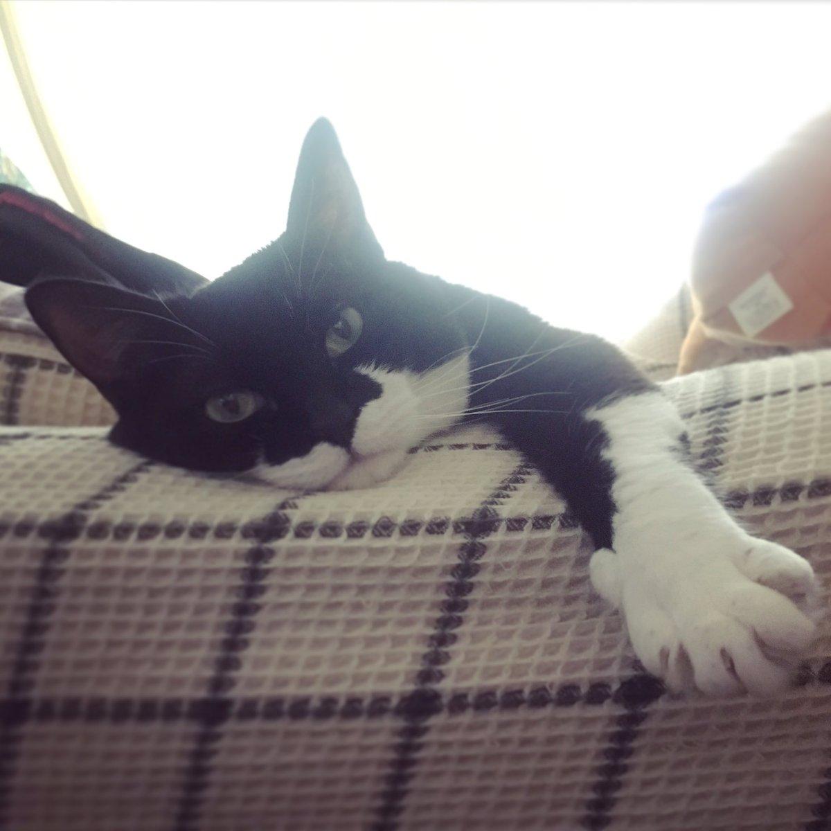 週末留守番させられてふてくされた猫がこちらになります pic.twitter.com/ydul1UuDwU