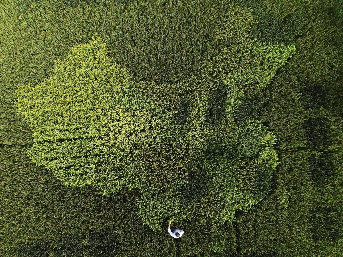 #BestOf: 22 photos that show #China as you&#39;ve never seen it before  http:// wef.ch/2pKRLwx  &nbsp;  <br>http://pic.twitter.com/lrx9Ft4VXU