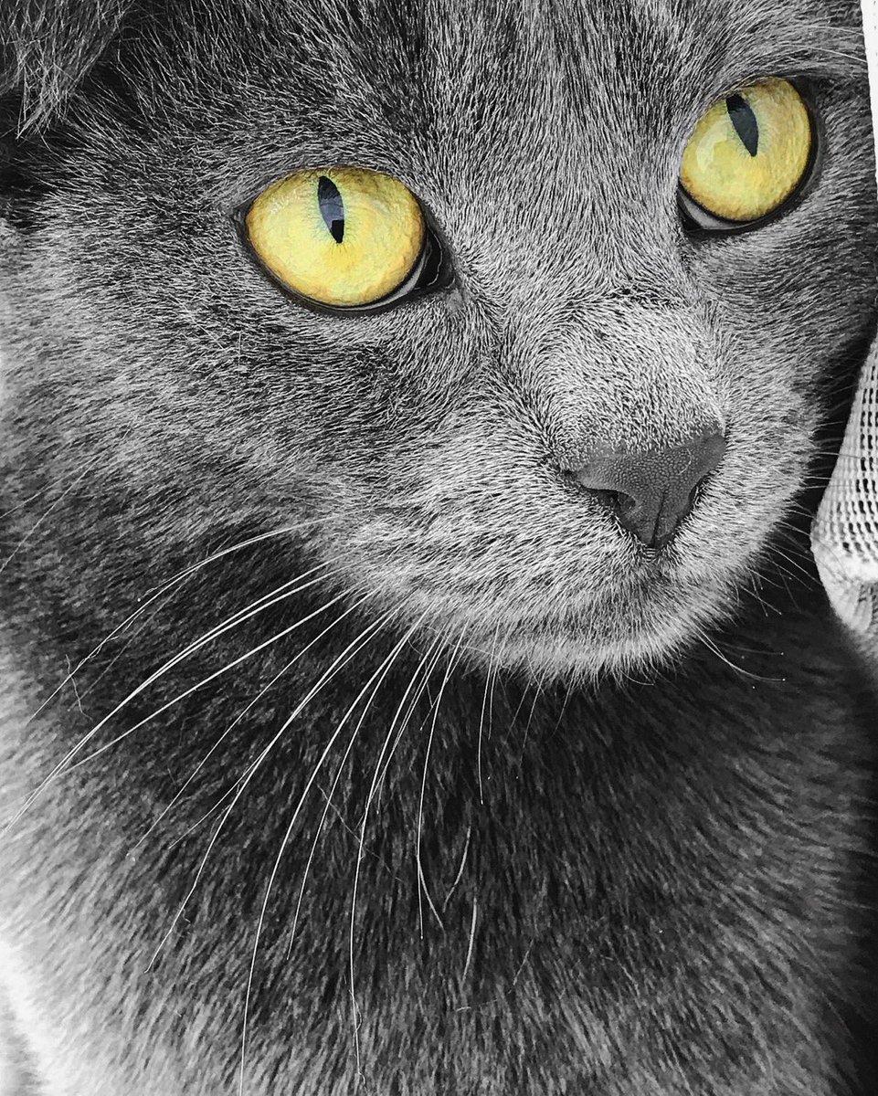 Our little grey panther  #iPhone7Plus #Zoom |  https:// instagram.com/p/BTOhplPj8EZ/  &nbsp;  <br>http://pic.twitter.com/5MOFhXwhdV