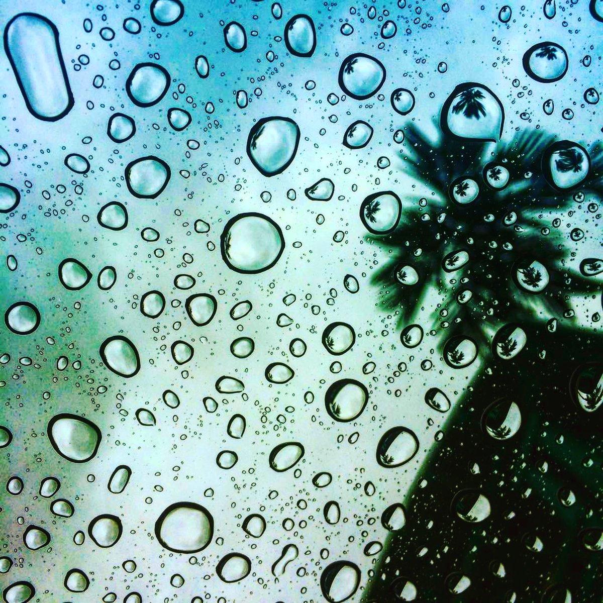 Que tengan feliz domingo. Les saludo desde la nublada y lluviosa Miami.