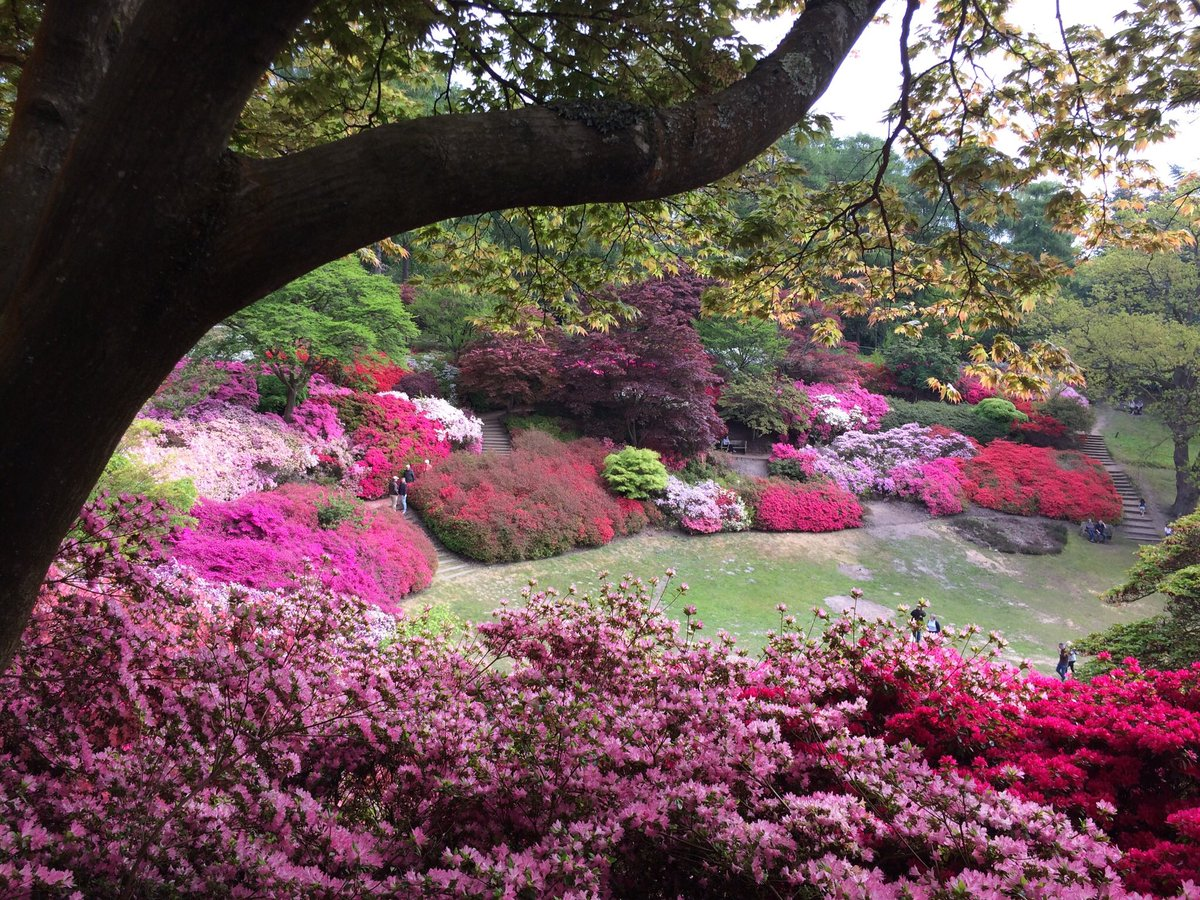 The punch bowl this morning. #windsor great park <br>http://pic.twitter.com/SawAAwzequ