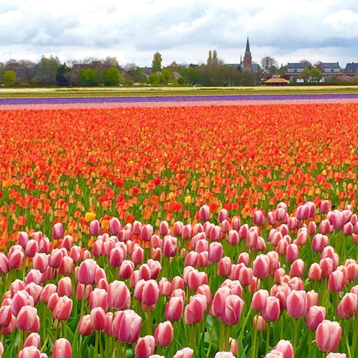 Driving around the tulip fields southwest of #Amsterdam this afternoon. They never fail to impress!  <br>http://pic.twitter.com/hFJr3IAkAN