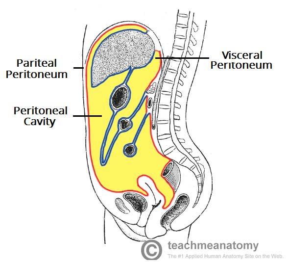 Nephrology Review Peritoneal Dialysis