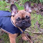 @CitizenTekk @PetChatz This would be ideal for my frenchie roko, thanks for the chance x @keal_linda @annalb83
