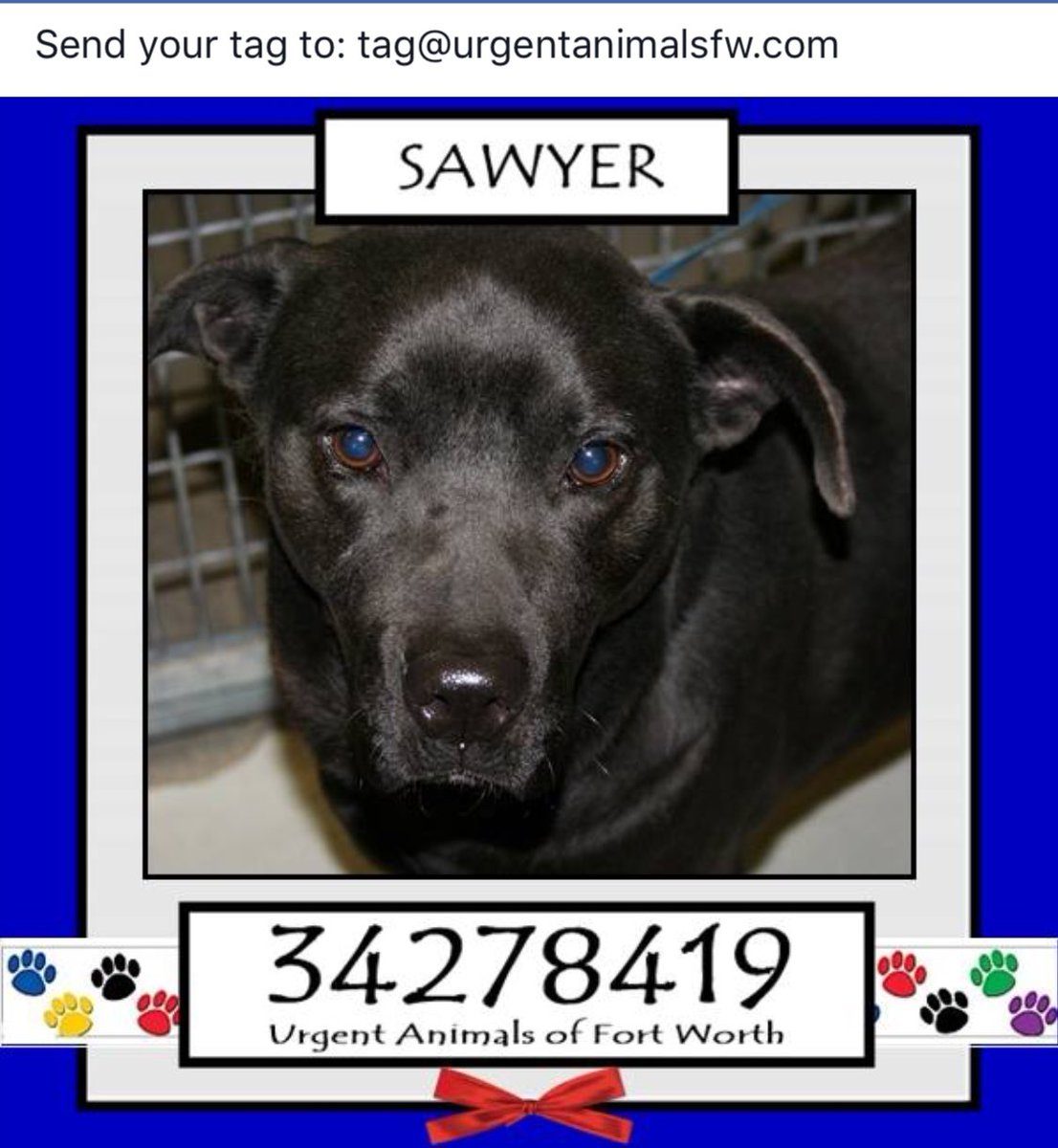 SAWYER #FortWorth #TX 2BANYTIMENEEDS A #HERO TO STEP UP AND SAVE PLZ HELP #Adopt #Foster #Pledge for #Rescue   https://www. facebook.com/fwaccurgents/p osts/1480608482011241 &nbsp; … <br>http://pic.twitter.com/UFZqNWLVbC