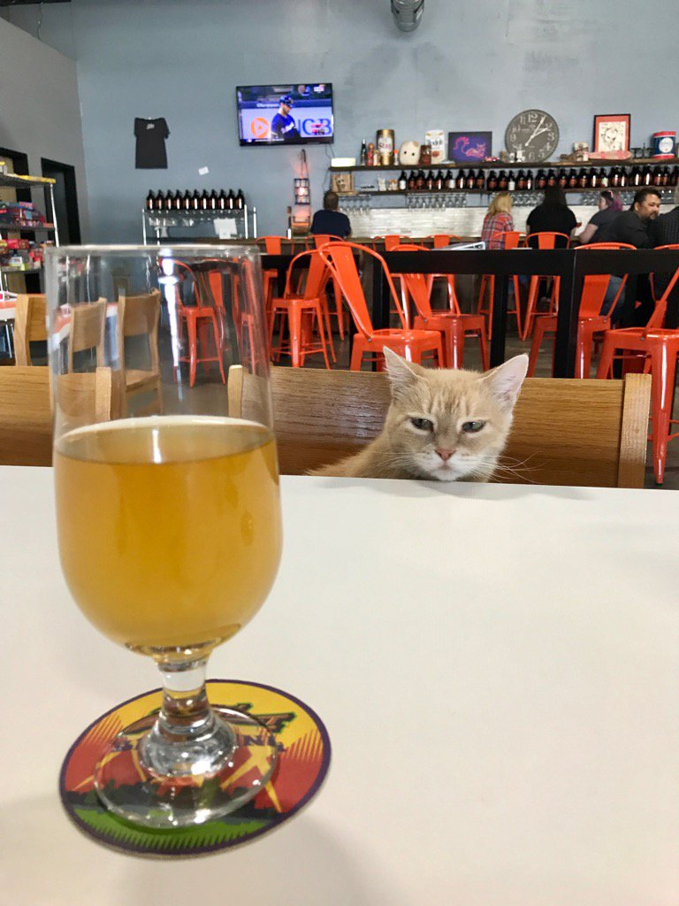 2nd shift brewing 2ndshiftbrewing twitter no kitty this is my craftbeer it s so good even the cats want some 2ndshiftbrewingpic twitter com trgrmc4lmw at 2nd shift brewery and tasting room