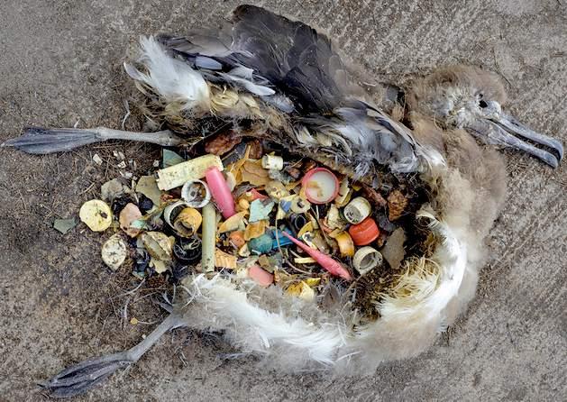THREAD. I want to talk for a second about how we're going to fix this ocean plastics problem https://t.co/996i5xzdXL