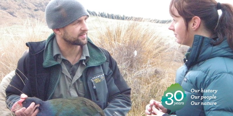 2010: The road to recovery for takahē gets a little easier with 21 chicks hatching in predator-free sanctuaries. #DOCturns30 https://t.co/PwsOJFxJkB