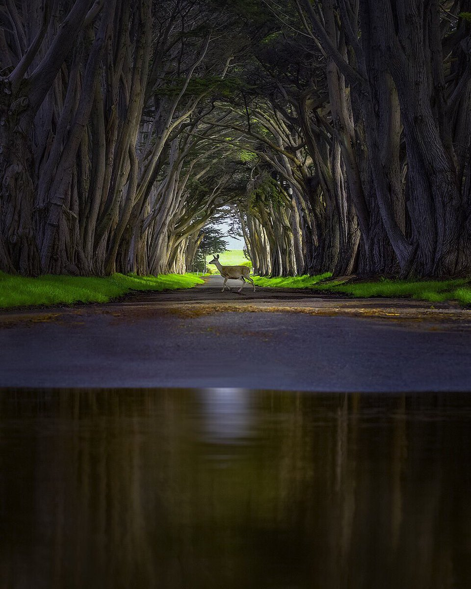 Our most popular pic last week: Cypress Tunnel @PointReyesNPS by Nick...