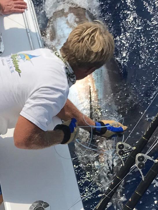 Kona, HI - Ez Pickens released 2 Blue Marlin.