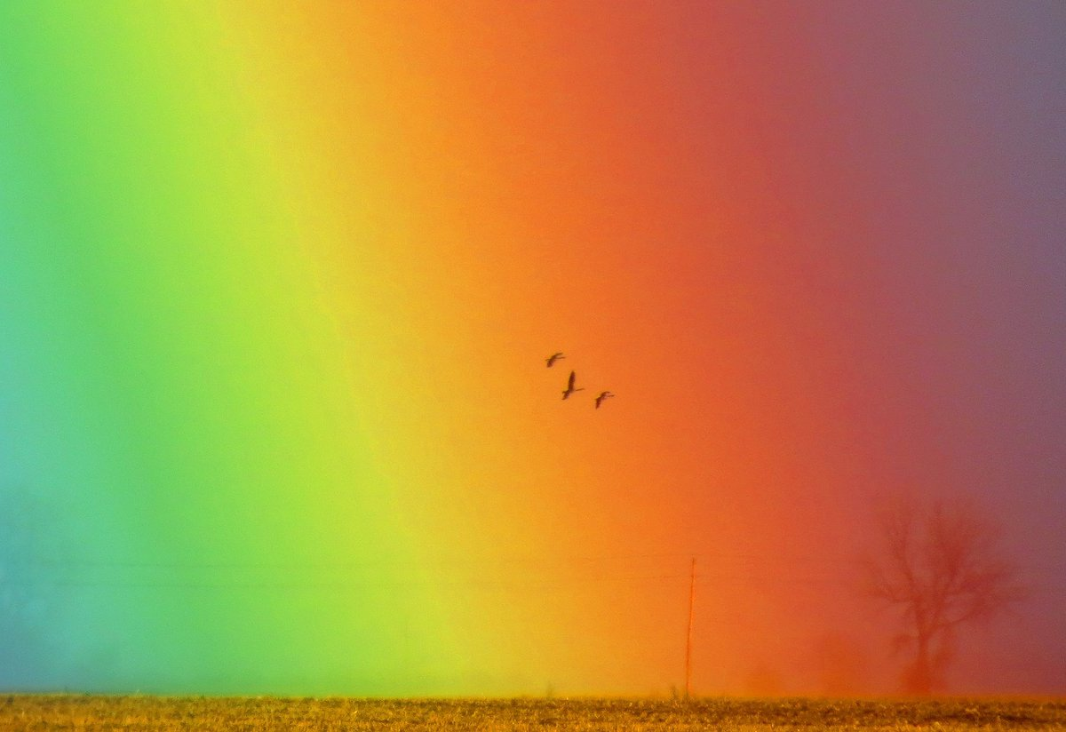 Check out this crazy-amazing #rainbow pic from Morris Wetland Manageme...