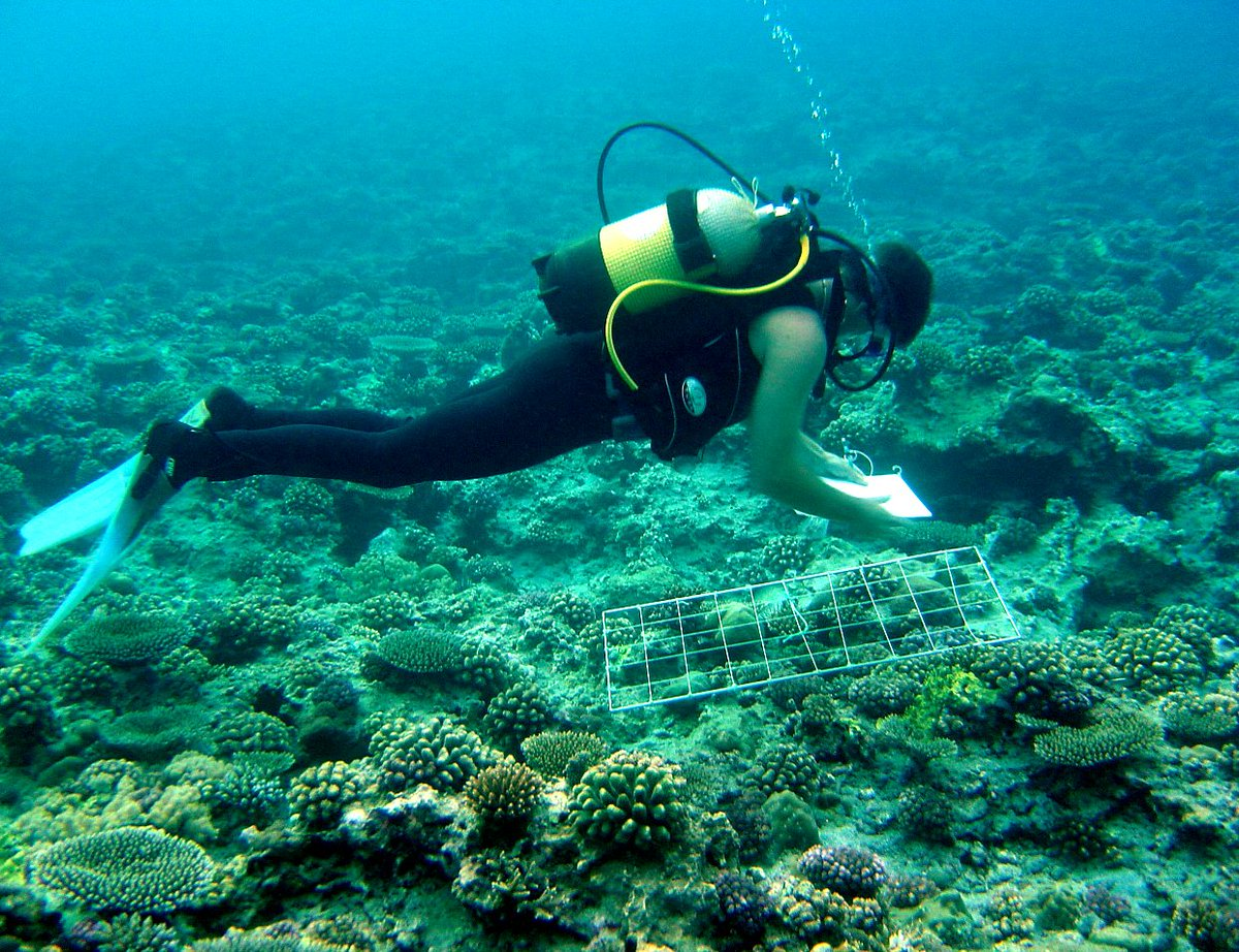 marine biology research paper topics