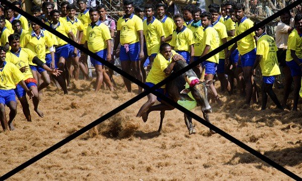 Replug: Against Jallikattu   #Jallikattu #TamilNadu