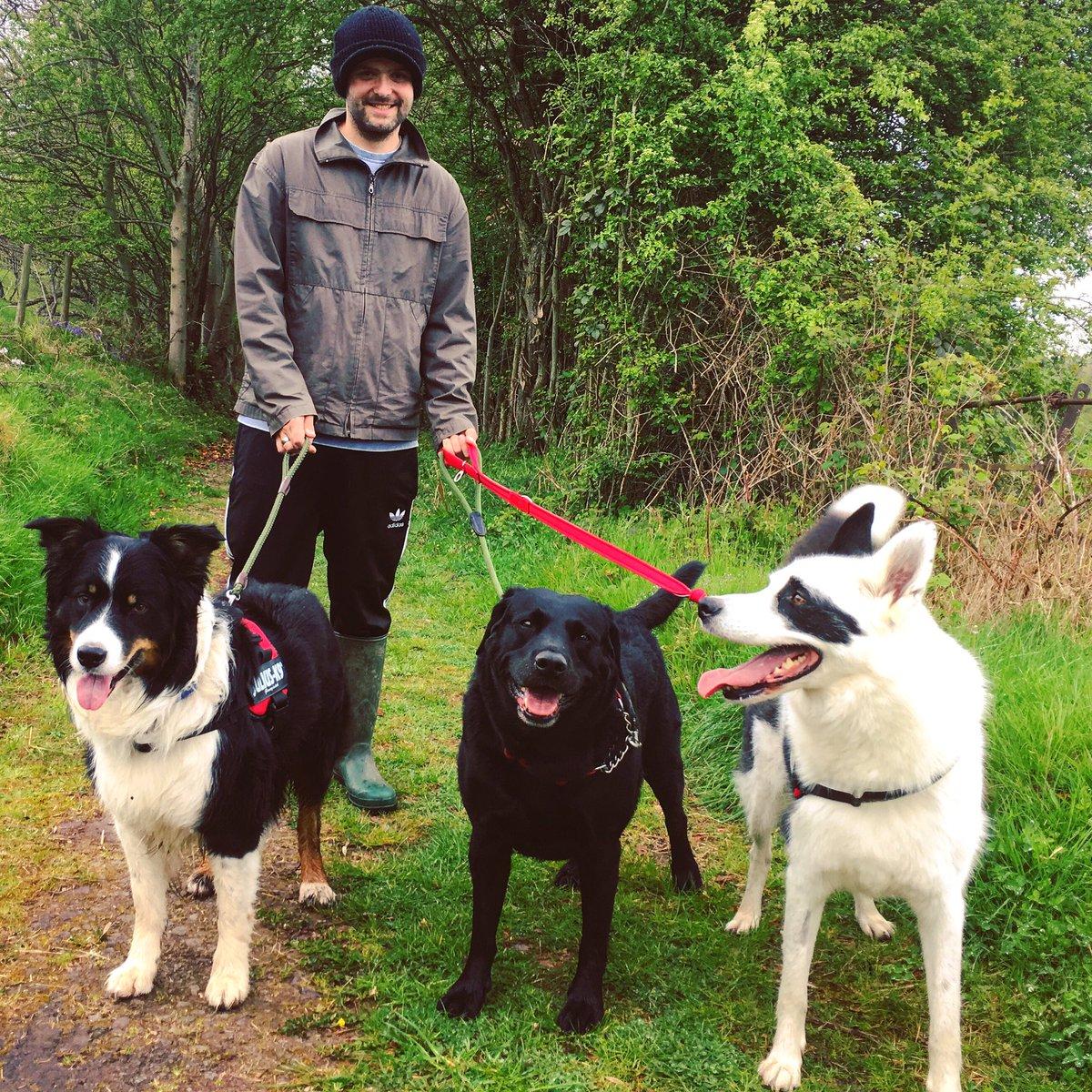 Massive Monday with the 3 Amigos: Bandi, Billy &amp; Maxie  #Husky #collie #blacklab #threeamigos #walkies #maxie #bandi #billy #dansdogdaycare<br>http://pic.twitter.com/f1lVh6TNMB