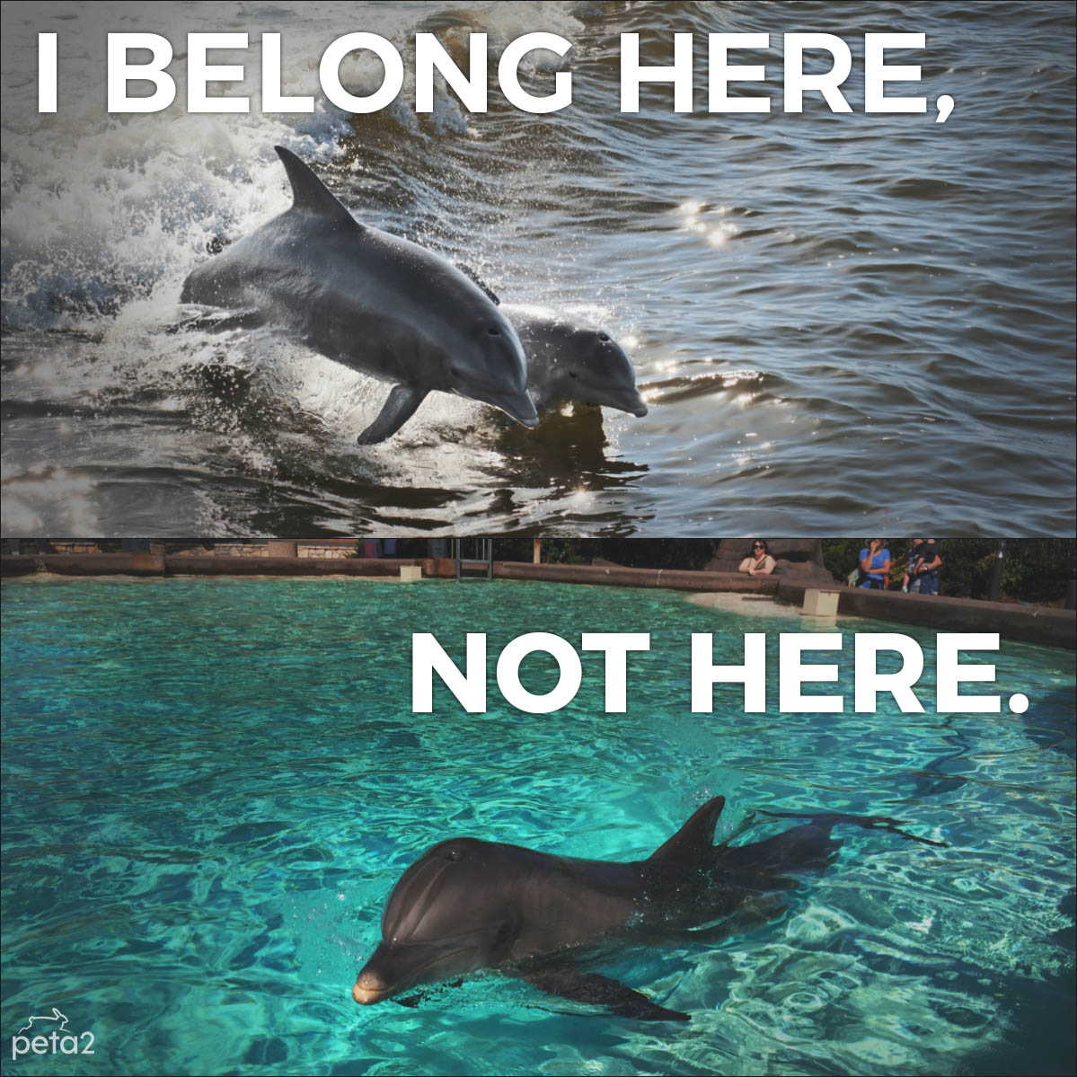 At #SeaWorld, dolphins are denied everything natural & important t...