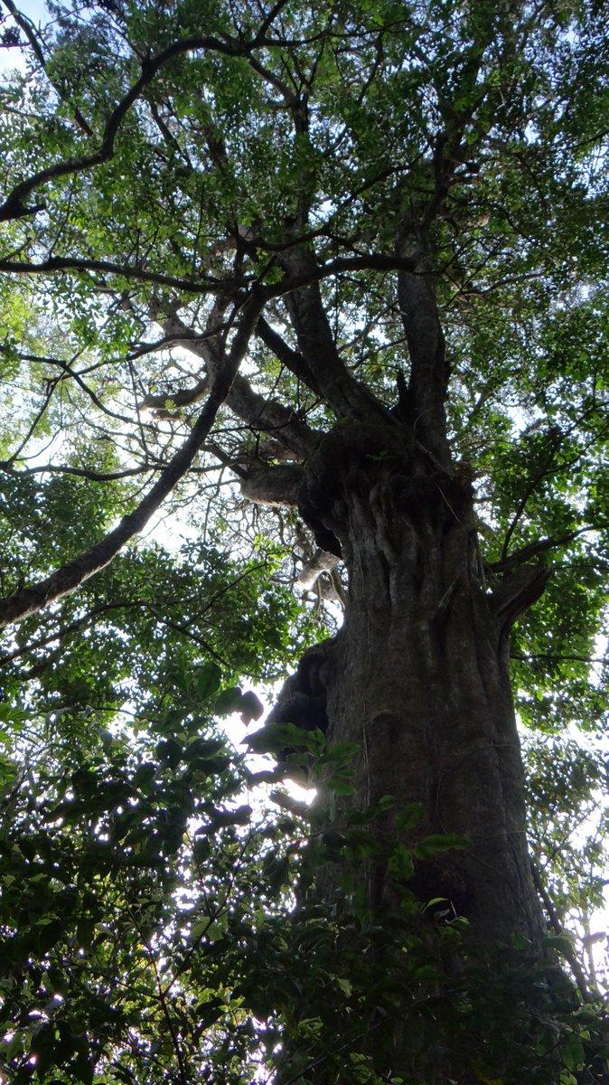 24 hours oxygen tree