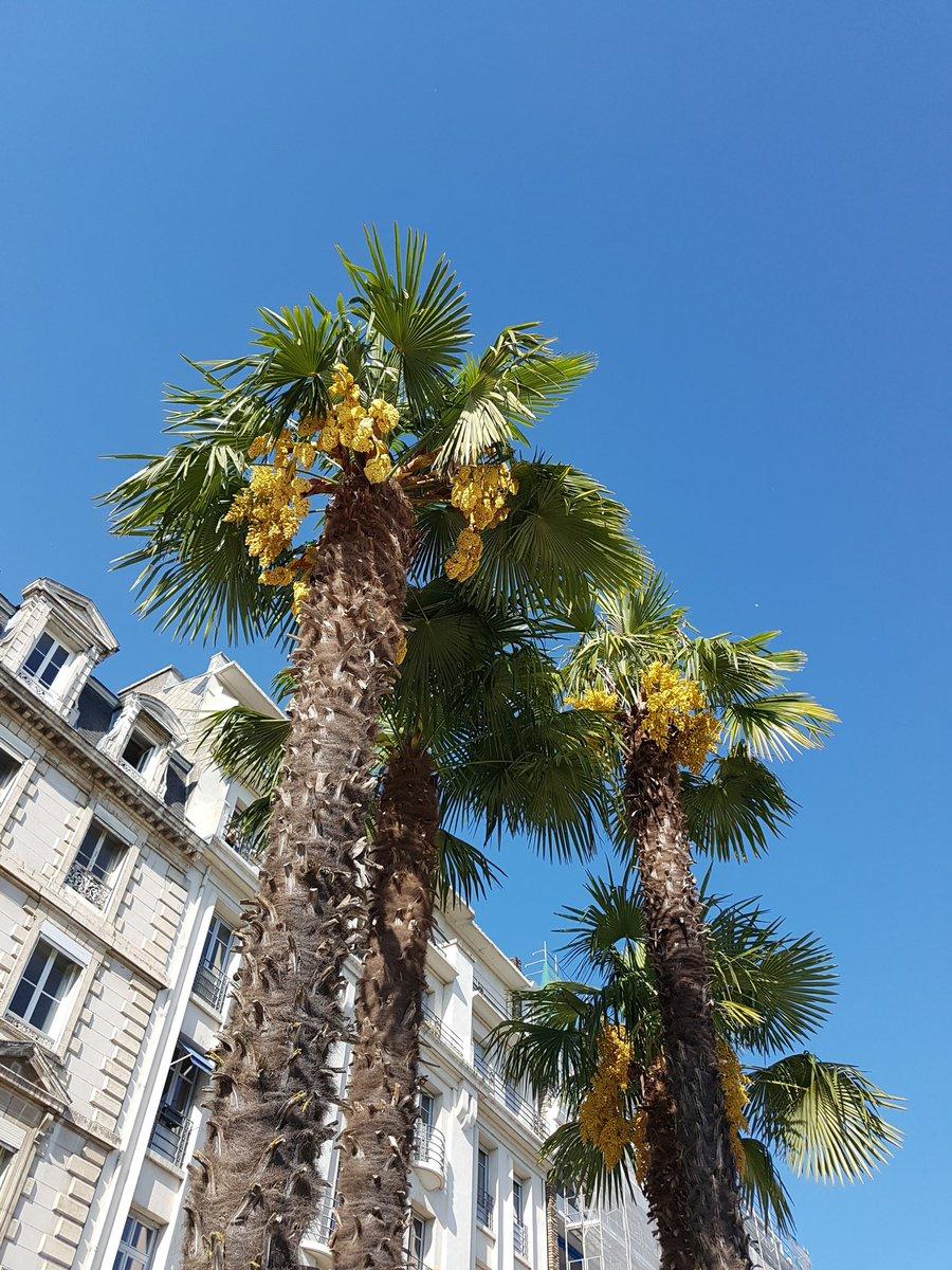 About this week-end part 2 #Pau #chateaudePau  #jouerlatouristedansmaville #sunnyday #26degres ☉<br>http://pic.twitter.com/PlKXZCJAUS