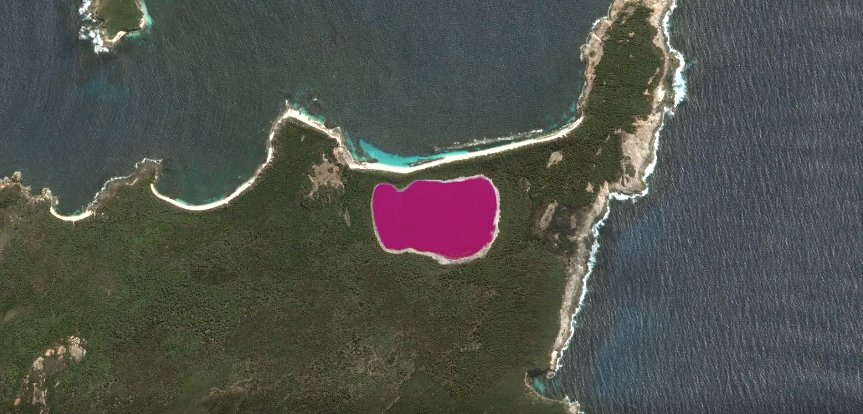 Why is this Australian lake bright pink?   #WhatOnEarth