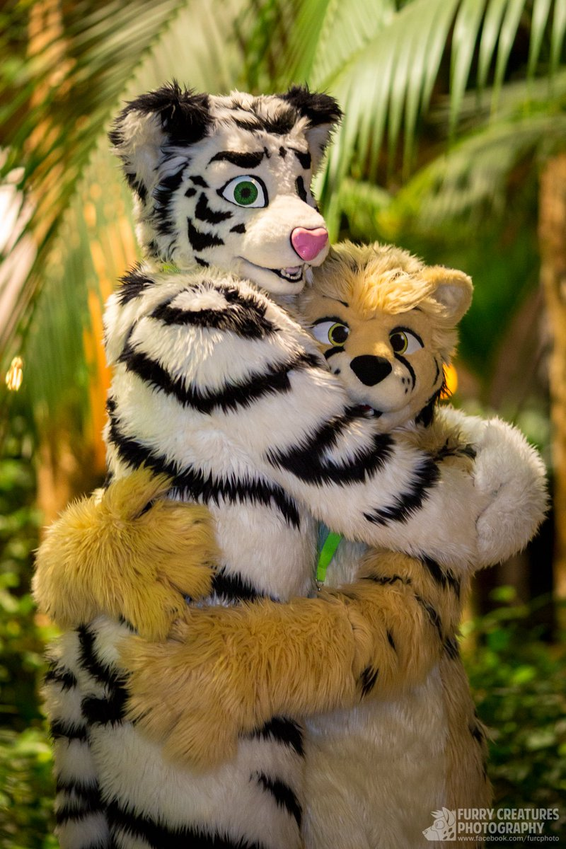 "furry c. photo @nfc on twitter: ""there's no cuddling like feline"