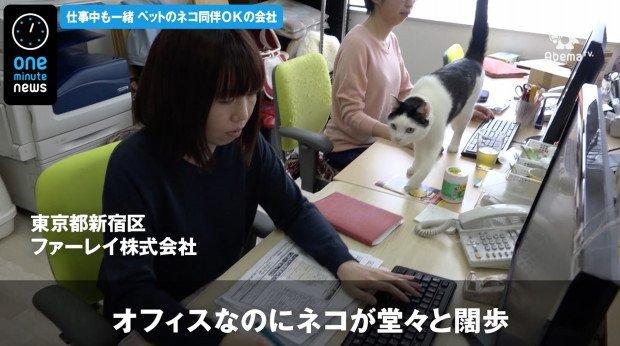 【天国】「猫好きの優秀な方が来てくれる」、猫同伴OKの会社 https://t.co/nJn569GUuf  東京・新宿区のファーレイ株式会社では仕事中にも猫がフロアを闊歩。開業当時の社員が猫を連れてきたことがきっかけだという。