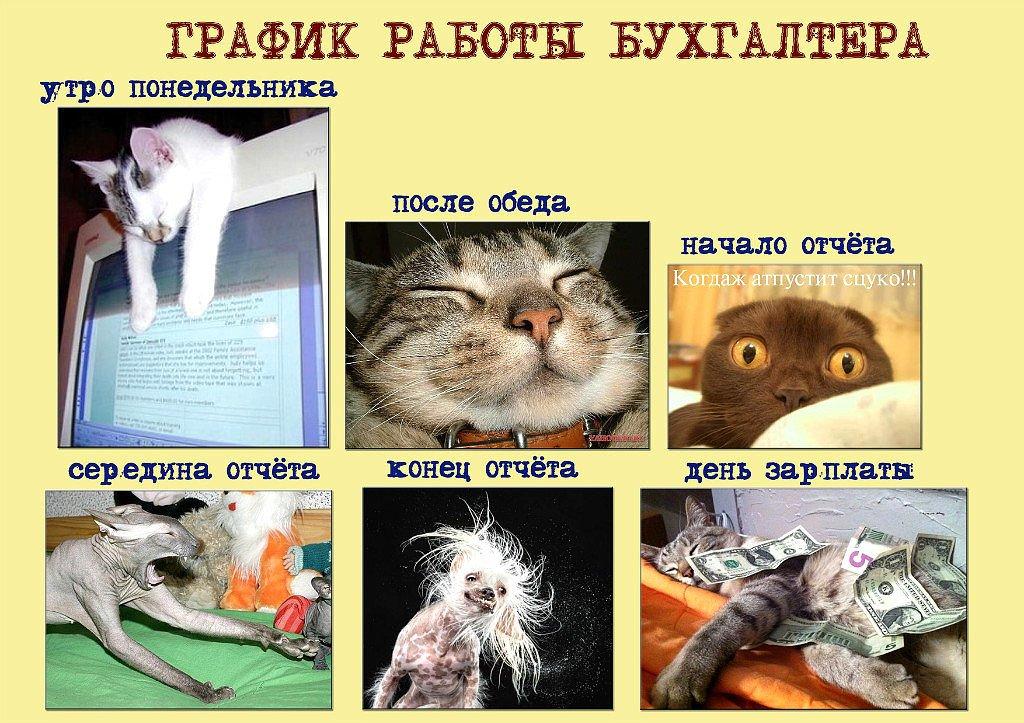 Отчет об открытках