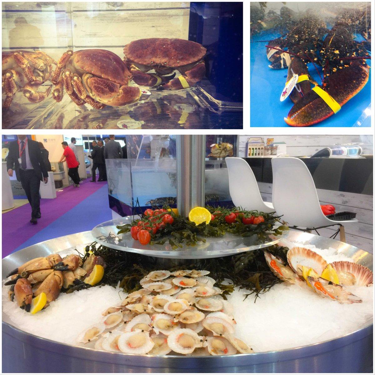Welsh produce looking fantastic! #seafood #crab #lobster #scallops #SEG17
