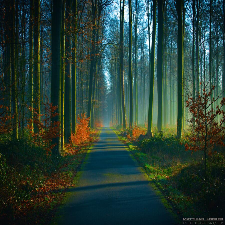 #Paths, #Forests and #Gardens of our amazing #Earth <br>http://pic.twitter.com/BkHZ0Wrvim