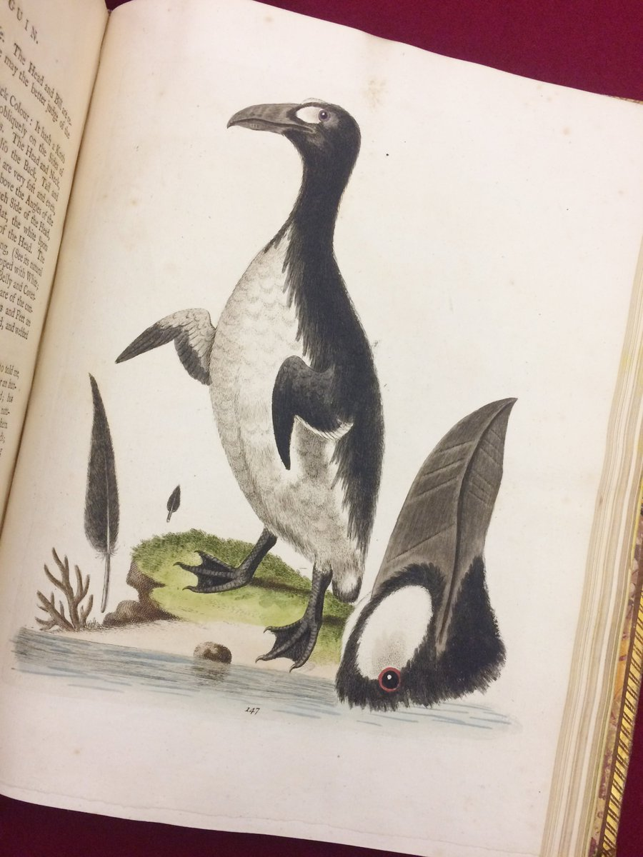 Happy #WorldPenguinDay! Illustration from George Edwards A natural history of birds (London, 1750) [Q.3.21]