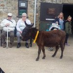 South Cots on tour at the Donkey Sanctuary in Devon.