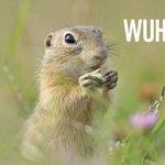 *Freudensprung* 🤸♀️ Wir haben die 150.000-Marke geknackt! Auf gehts: Jetzt RT für die Artenvielfalt 🦋 https://t.co/70lP1Mekfy #LivingLand