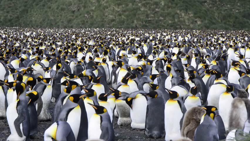 Whoa. Crowd about 100x size of #TrumpInaugural #WorldPenguinDay   https:// cdn.shutterstock.com/shutterstock/v ideos/15458623/thumb/1.jpg?i10c=img.resize(height:160 &nbsp; … )<br>http://pic.twitter.com/OQakGGYHIh