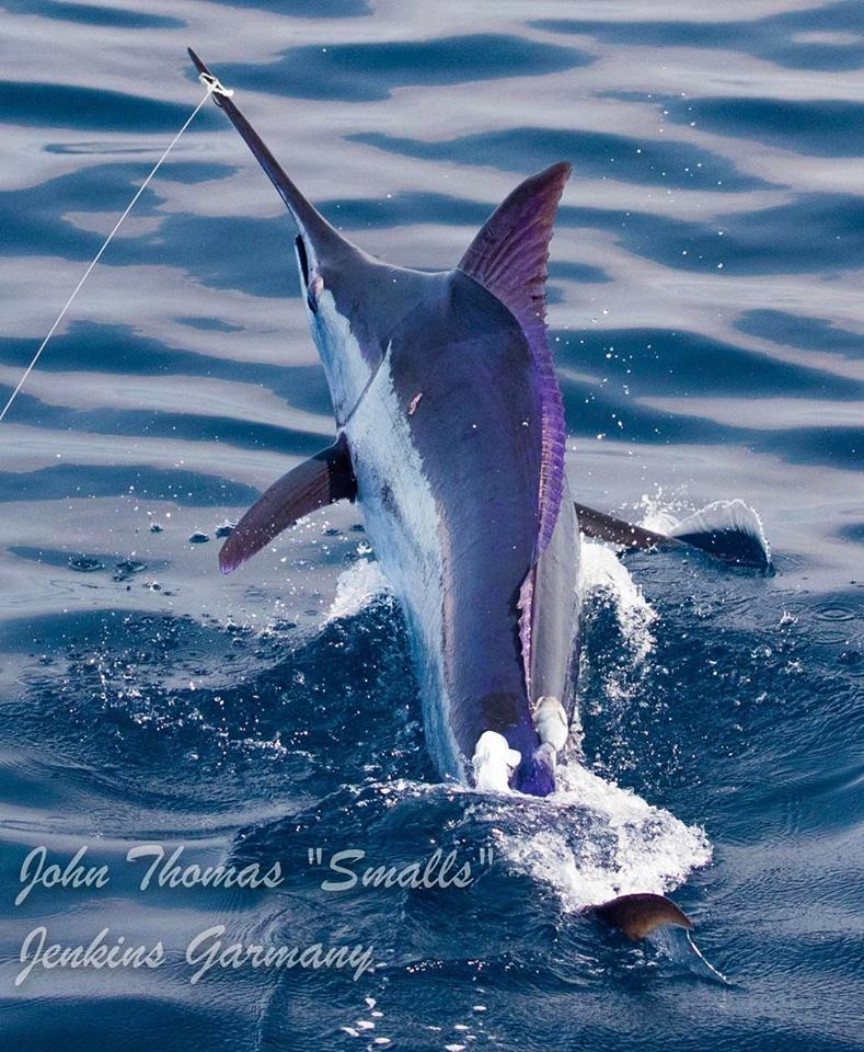 Los Suenos, CR - Fish Tank went 15-19 on Blue Marlin and 1-1 on Striped Marlin on an overnight trip.