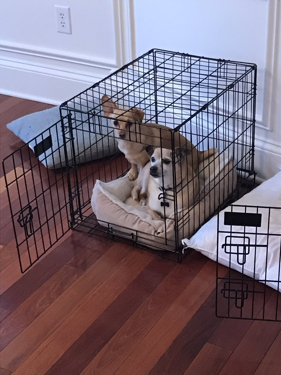 Charles sharing his crate. With his nemesis, of all creatures. There is hope for peace