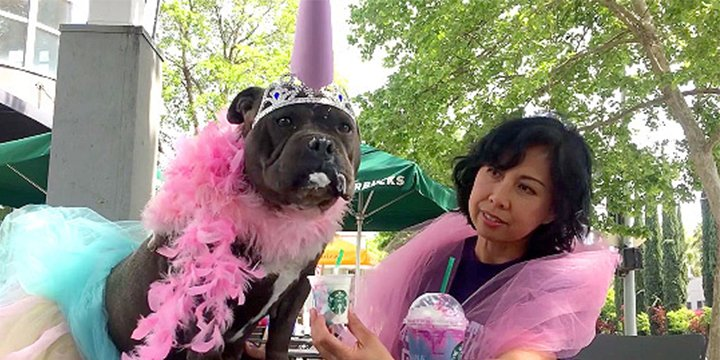Watch this shelter pup try a #UnicornFrappuccino and turn into a unico...