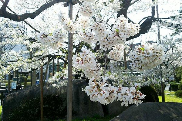 東北のすばらしさを伝える #東北でよかった というタグが広がっています。東北は桜の季節を迎えています。GWはぜひ東北へ。 https://t...