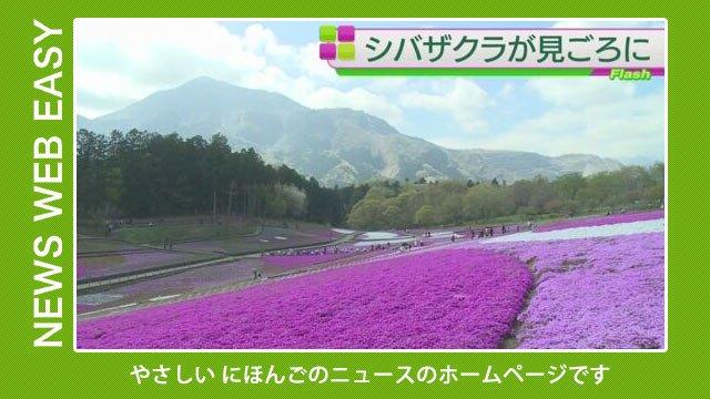 【NEWS WEB EASY】「2025年の万国博覧会を大阪府で開きたい」「埼玉県秩父市 シバザクラの花がたくさん咲く」を公開しました。 #nhk_news  https://t.co/ryX01BCMBO