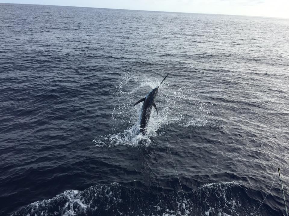 Cape Verdes - Amelia went 1-2 on Blue Marlin.