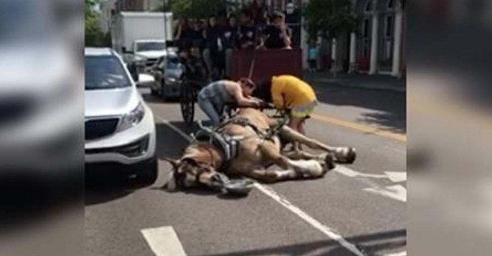 Video Instagram: cavallo da carrozza cade al suolo con malore