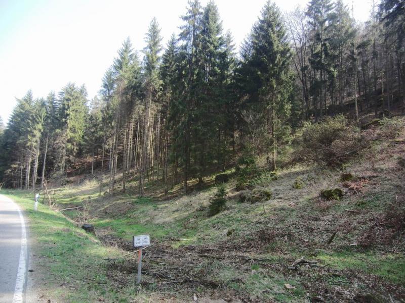 Waldgrundstück waldgrundstück hashtag on