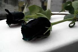 Погибшие на Светлодарской дуге военнослужащие были бойцами 53-ей мехбригады - Цензор.НЕТ 7217