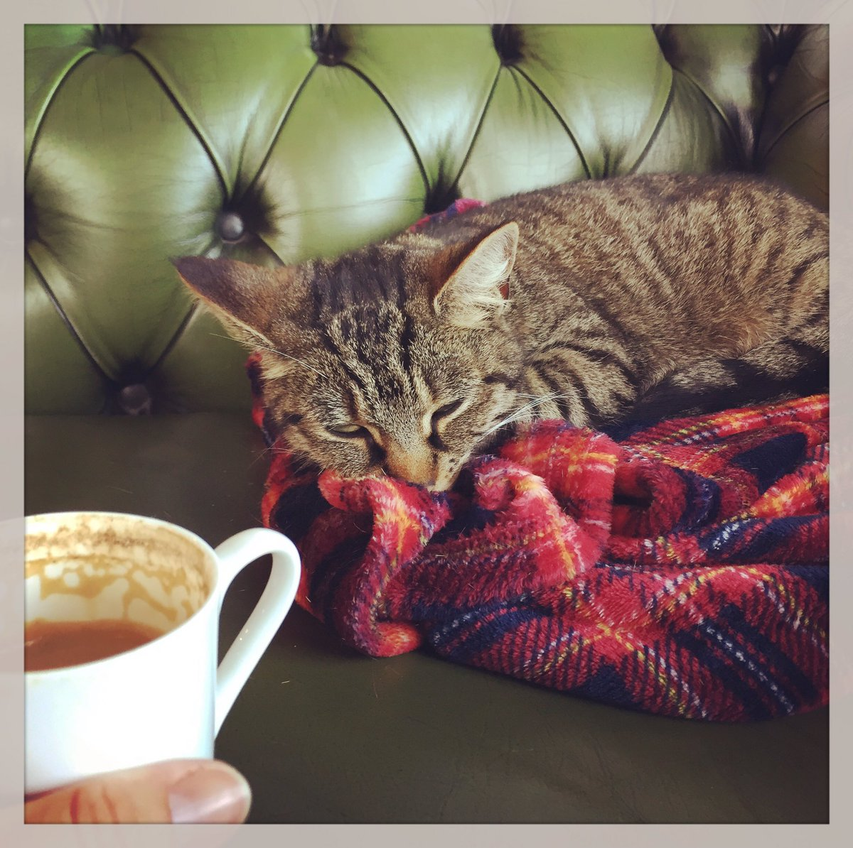 Morning! A cat and a good coffee, what else could you ask for? #cheltenham #local #barista #coffee #morning #cat #cuddles #blanket <br>http://pic.twitter.com/8b1xQOMwru