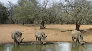 "#BBC: ""Kenya : le rhinocéros blanc en voie d'extinction""  http:// magaratimes.com/fr/2017/04/26/ bbc-kenya-le-rhinoceros-blanc-en-voie-dextinction/  … pic.twitter.com/hOUKVjTTjk"