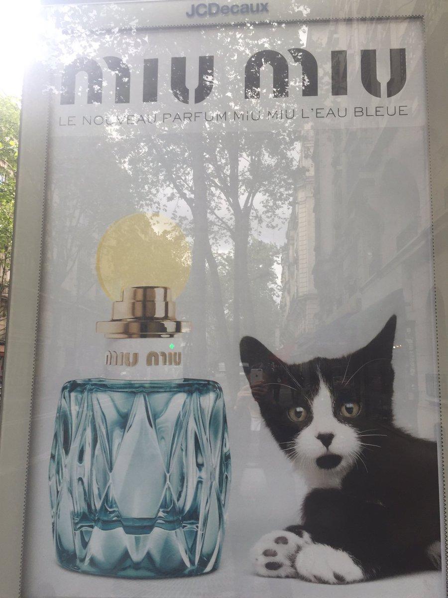 Même les pubs pour parfum se mettent au #lolcat.