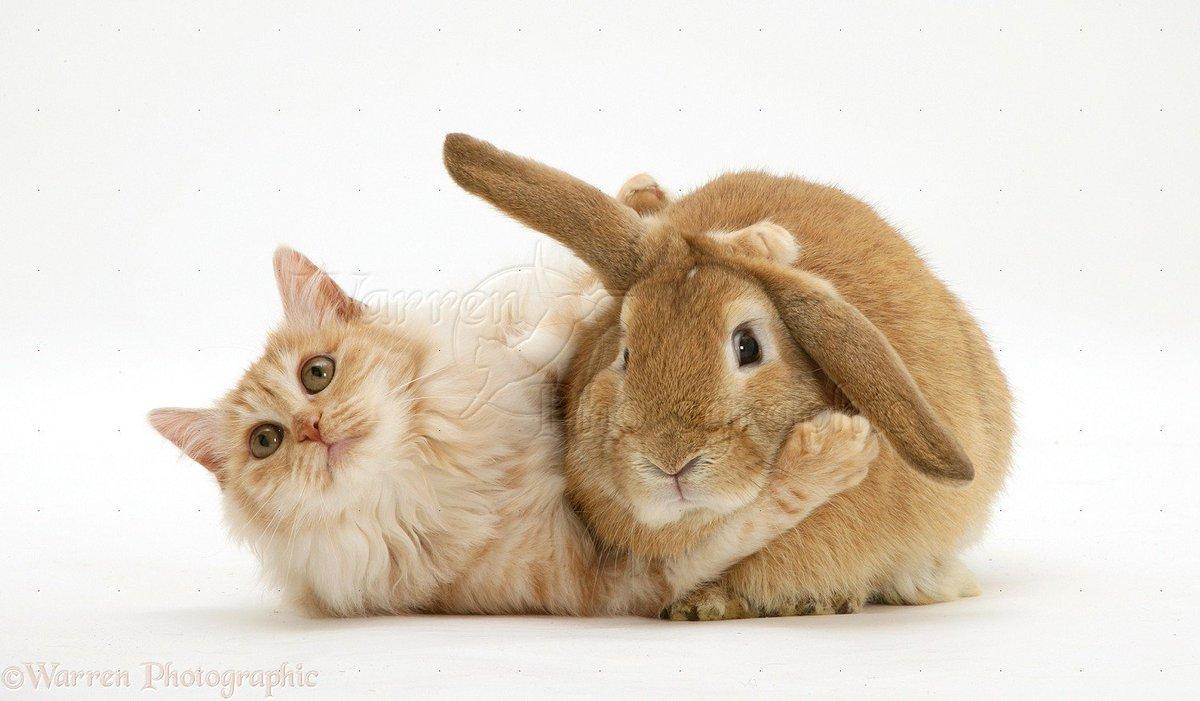 Открытки зайчик и котик
