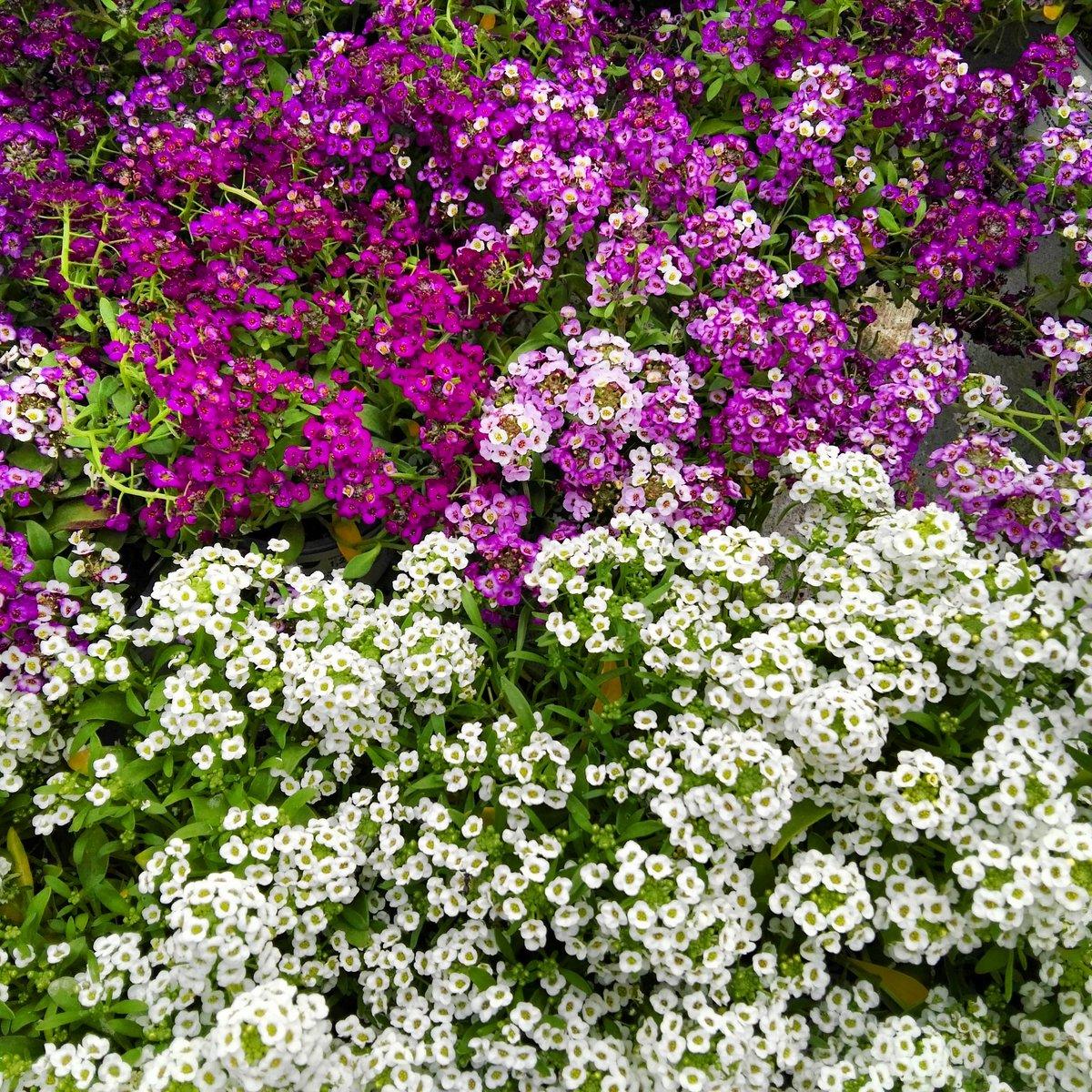 Entre las flores te encontré, entre las flores me quedo. #Primavera