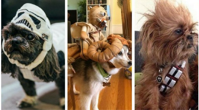 10 Out-Of-This-World @starwars Pet Costumes #MayTheFourthBeWithYou #StarWarsDay