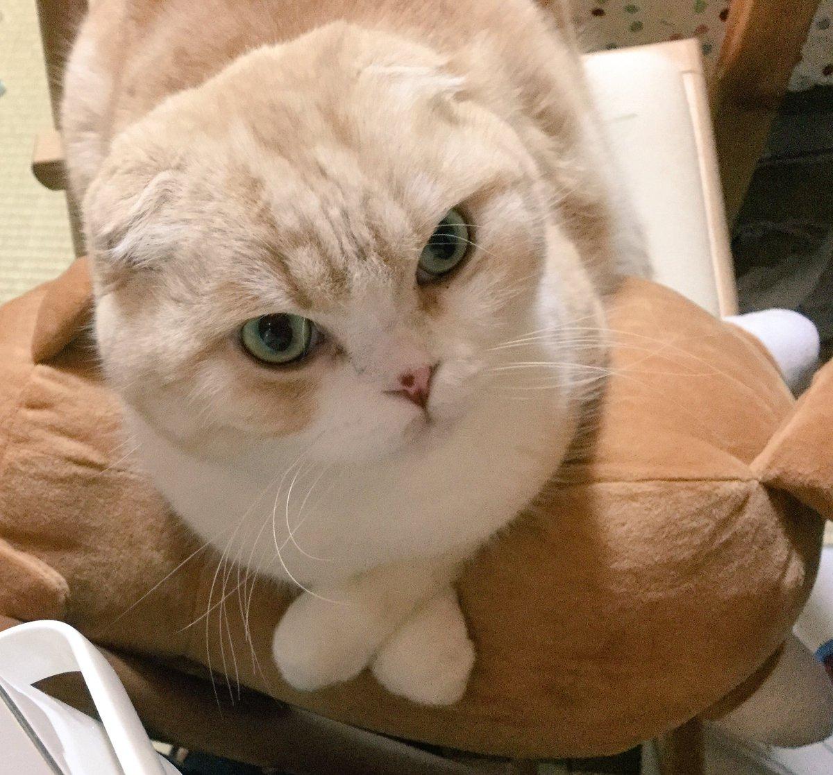 全然関係ないですが猫です。 https://t.co/bEaLYLBM1V