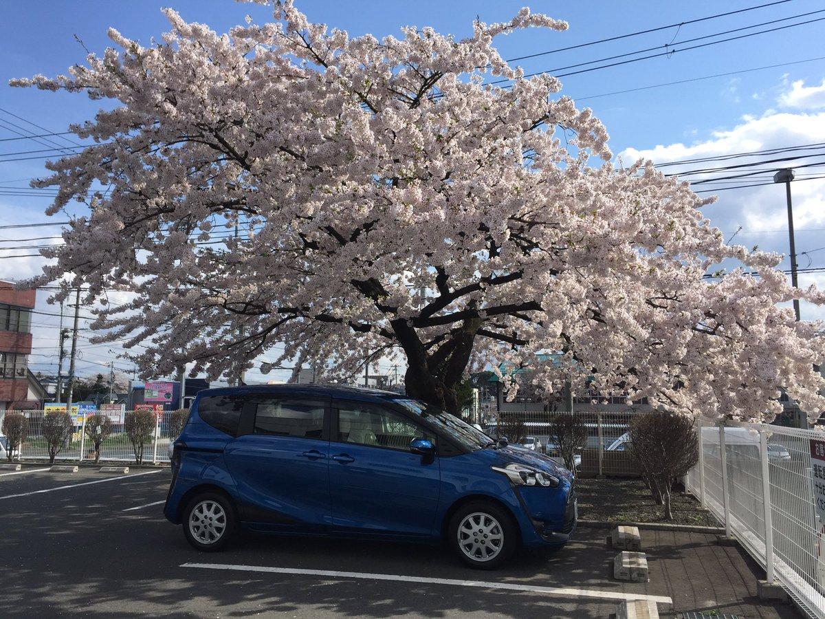 桜とシエンタ