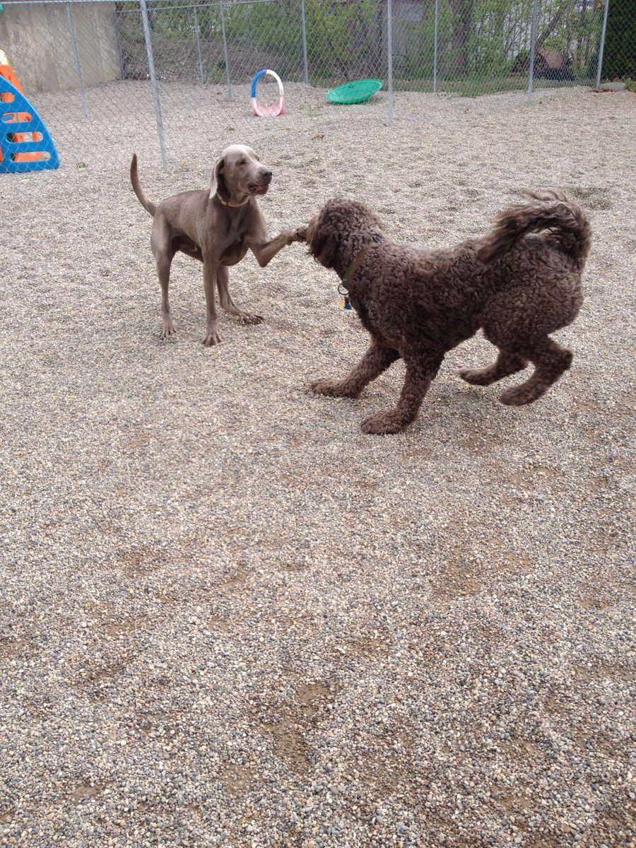 Stitch tries to give Tucker a high five!